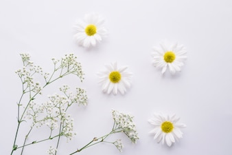 Delicate composition of daisies and baby's breath flowers
