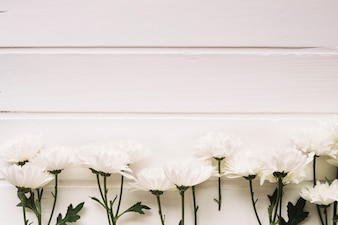 Delicate white flowers aligned in front of a white background with space on the top