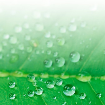 Detailed waterdrops in a leaf