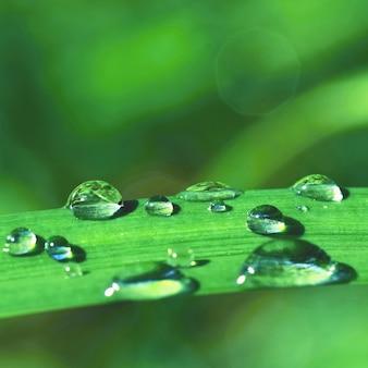 草の上で露。美しい自然の色の背景。自然の朝の時間。