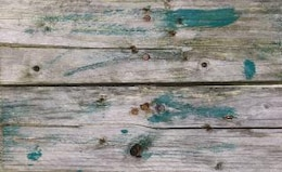 Discoloured wood