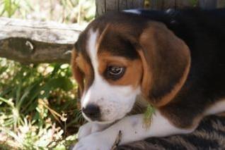 Dog, canine