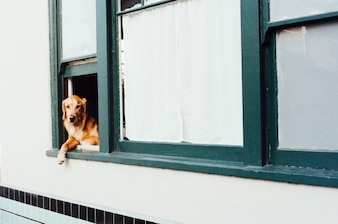 Dog at the window
