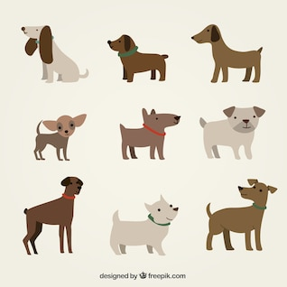 Dog cartoon vector design