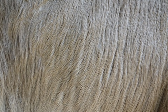 Dog hair close up