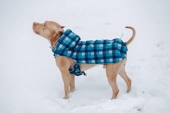 冬の公園の犬