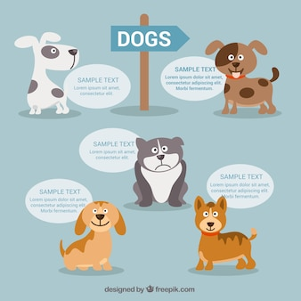 Dogs infographic
