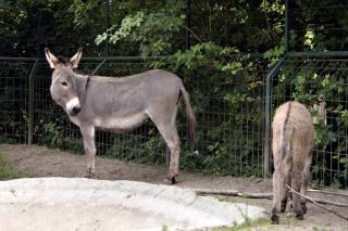 Donkey, zoo