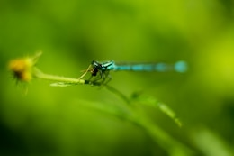 Dragonfly in green