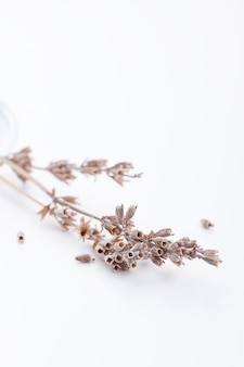 Dried flowers close up
