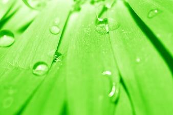 Drops sliding down a leaf