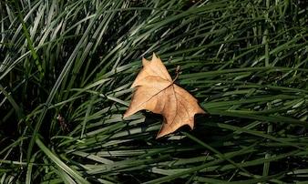 Dry leaf on grass