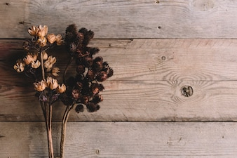 Dry wildflowers on wooden texture