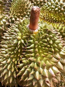 Durian - King of Fruits with Stem