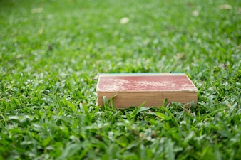 Education concept - Books lying on grass