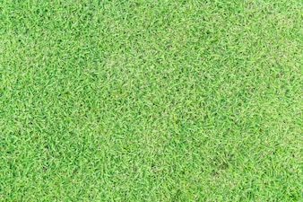 背景の空の草