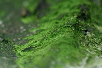 Extra green moss