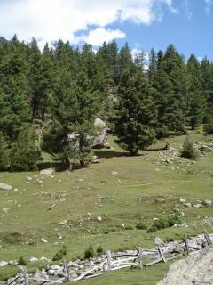 Fairy meadows, nanga parbat, parbat