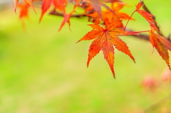Fall natural leaves light park