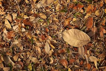柔らかい光とソフトフォーカスの秋の葉