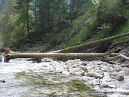 fallen trees  river