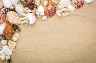 Fantastic background with sand and seashells
