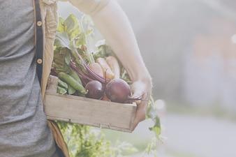 早起きの庭で木製の箱で新鮮なおいしい野菜を保持する農家の大人