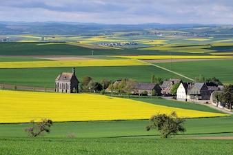 field eifel minkel landscape oilseed rape