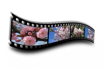 Film spring bloom filmstrip flower bud