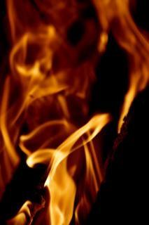 Fire , wild