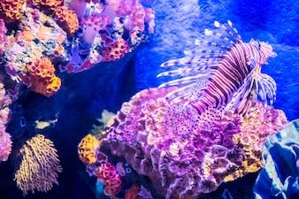 Fish in underwater