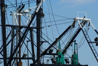 Fishng vessel rigging