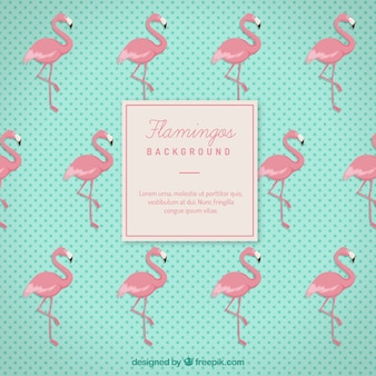 Flamingos background