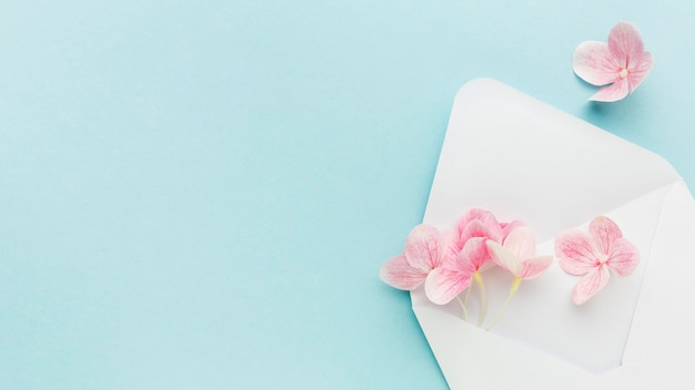Flat lay pink hydrangea flowers in envelope with copy-space