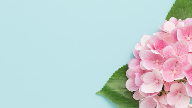 Flat lay pink hydrangea with copy-space