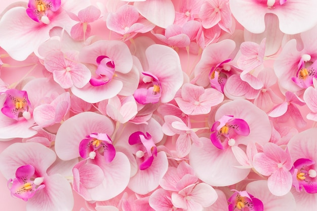 Flat lay pink orchids and hydrangea