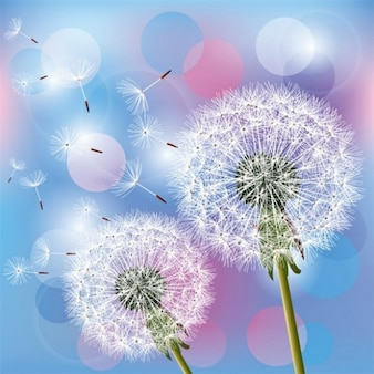 Floating dandelion seeds with bubbles background