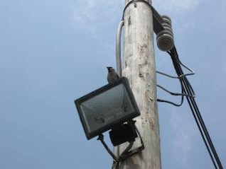 Flood lights, electricity
