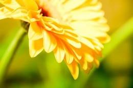 flower background  background  herb
