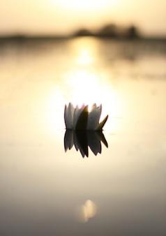 花は水に浮かんで