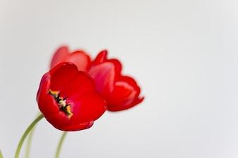 花美しい花屋チューリップ自然動物