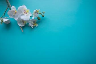 Flower on blue background