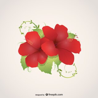 Flowers illustration vector