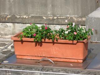 Flowers in Trough-Shaped Pot