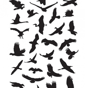 flying birds silhouettes graphics vector pack