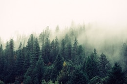 Fog coming to the forest