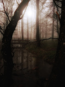 Fog glade tree bach bridge atmosphere forest