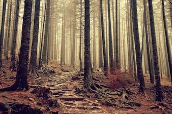 Foggy stair adventure vegetation leading