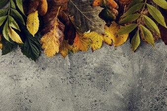 Foliage on concrete surface