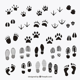 Footprints shadows of animals and human